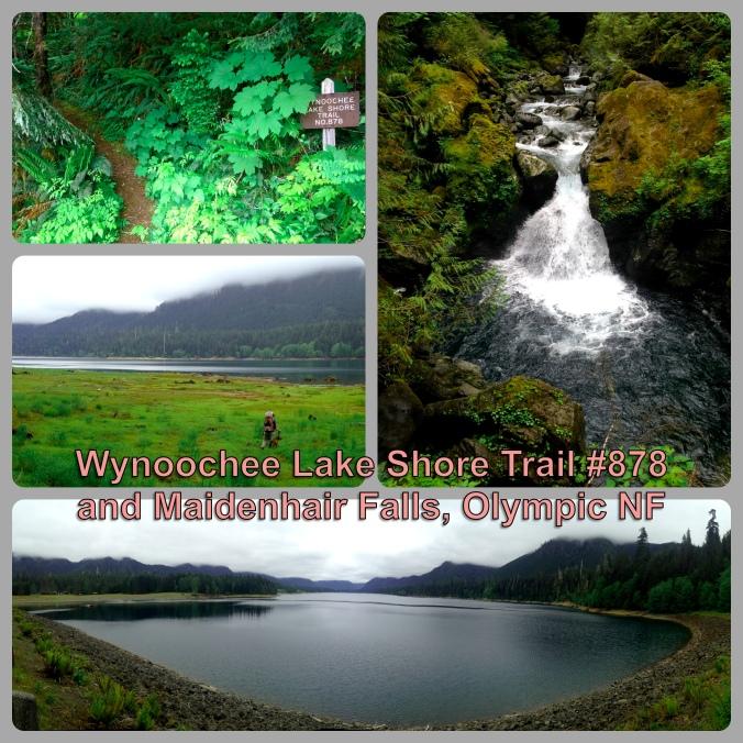 Wynoochee LS Trailblog image